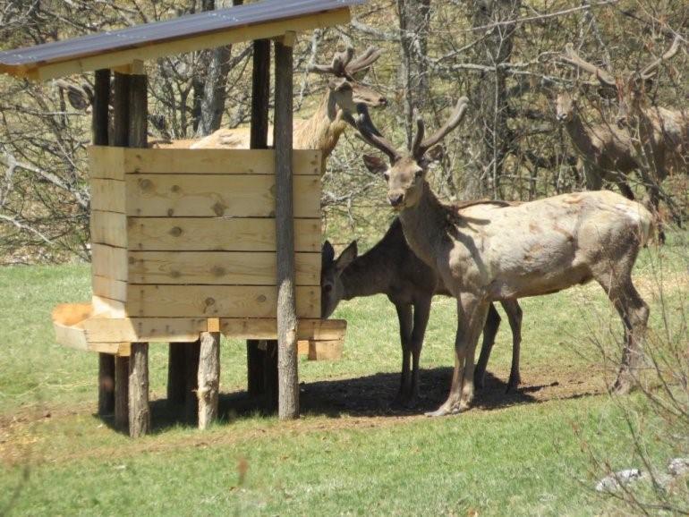 nacionalni park tara jeleni