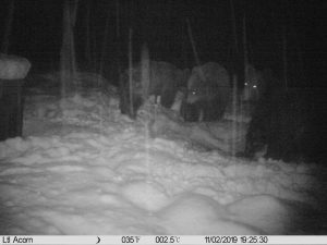 Medvedi na hranilistu