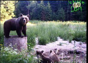 medved na hranilistu